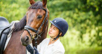 Was kostet ein Pferd?