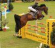 Abkürzungen im Pferdesport