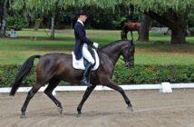 Die Grundausbildung des Pferdes – die klassische Ausbildungsskala
