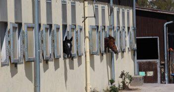 Den richtigen Pferdestall finden